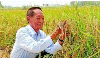 89岁袁隆平英文致辞上热搜,为何看哭万千网友?