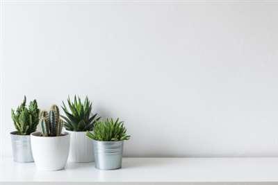 养个小盆栽,用绿意疗�K自己身心