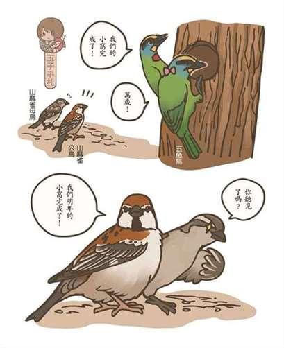 山麻雀择洞巢繁殖